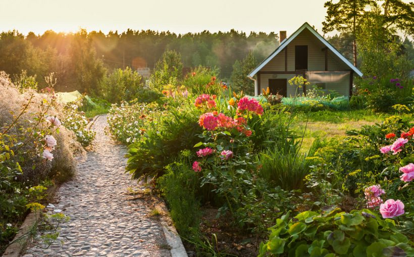 Pasi pentru a va crea propria gradina de acasa